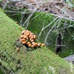 Pequeños hongos