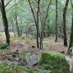 Pequeño bosque autóctono