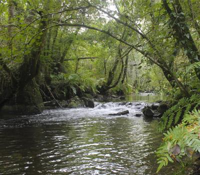 SM14 Río Mendo (Oza dos Ríos)
