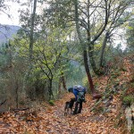 Camino de castaños hacia Froxán