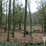 Bosque de Castaños y Carballos