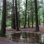 Bosque Mirador Pedra Bela