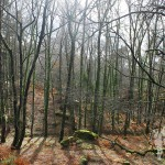Bosque de camino a la Cascada do Arado