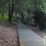 Pasarela Parque Natural Bosque dos Veciños