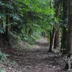 Parque Natural Bosque dos Veciños