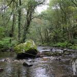 Orillas del Río Eo