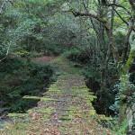 Puente rústico de madera