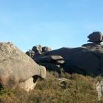 Piedra con forma de cerdo y anfibio gungano del planeta Naboo