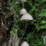 Hongo creciendo en un tronco