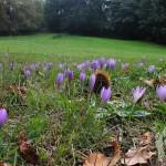 Campo cubierto de flores