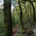 Bosque autóctono