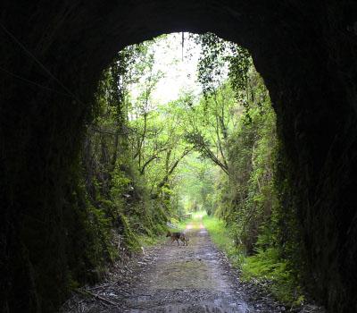 Ruta del Ferrocarril (San Tirso de Abres)