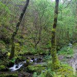 Camino cascada del arroyo de la Salgueira