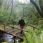 Antiguo puente de madera