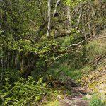 Bosque frondoso especies de ribera
