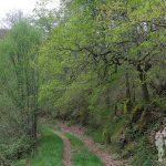 PR-AS 278 Ruta Os Cortíos (Barcia)