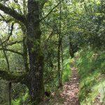 Frondoso bosque de castaños y carballos