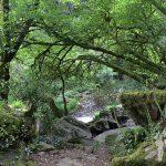 Bosque da Fervenza do río Toxa