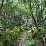 Bosque autóctono de Vilanova