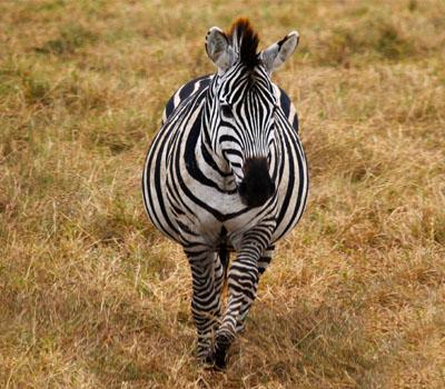 Ngorongoro (Tanzania)