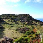 Bosque Petrificado de San Andrés de Teixido