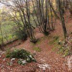 Camino Natural de la Senda del Oso