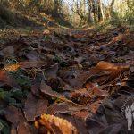 Camino helado de hojas