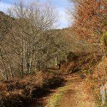 Camino bajada Seimeira de Vilagocende