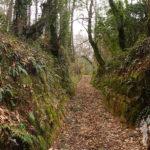 Camino entre castaños y eucaliptos