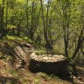 Ruta do Castañoso (A Fonsagrada)