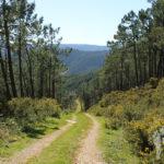 Camino de tierra hacia Cariño