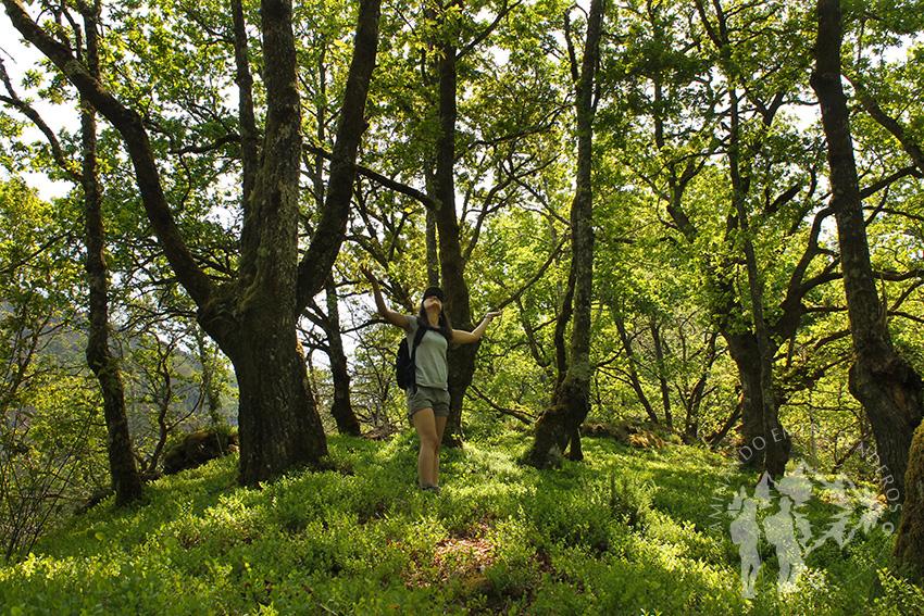 Bosque Castañoso