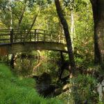 Puente río Escádebas