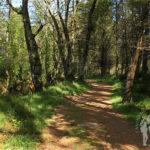 Camino río Escádebas