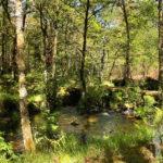 río Escádebas