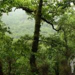 Valle del Eume