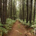 Camino hacia Oleiros