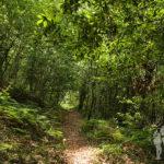 Camino hacia fervenzas Raxoi