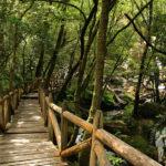 Pasarela madera río Valga