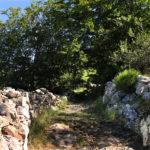 Entrada bosque de acebos