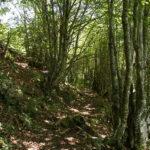 Camino hacia Peña Gúa