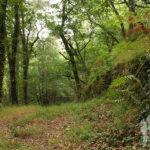 Ribera del Mandeo