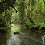 Río de Beseño