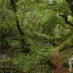Bosque de ribera (Beseño)