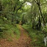 Bosque de ribera (Ulla)