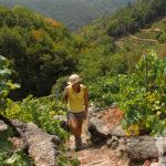Ascendiendo por viñedos