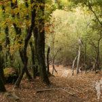 Bosque cercano a Reguenga