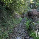 Camino Insua