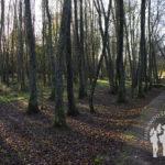 Camino Río Carregal