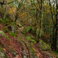 Monte Aloia (Pontevedra)